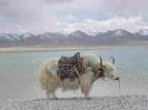 Tibet4_11