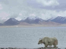 Tibet4_15