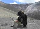 Tibet4_2